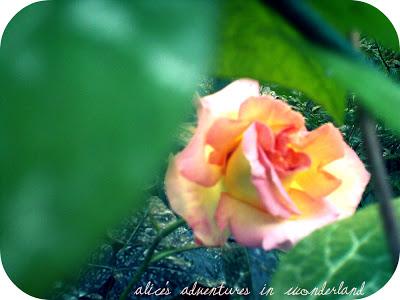 {Gardens}